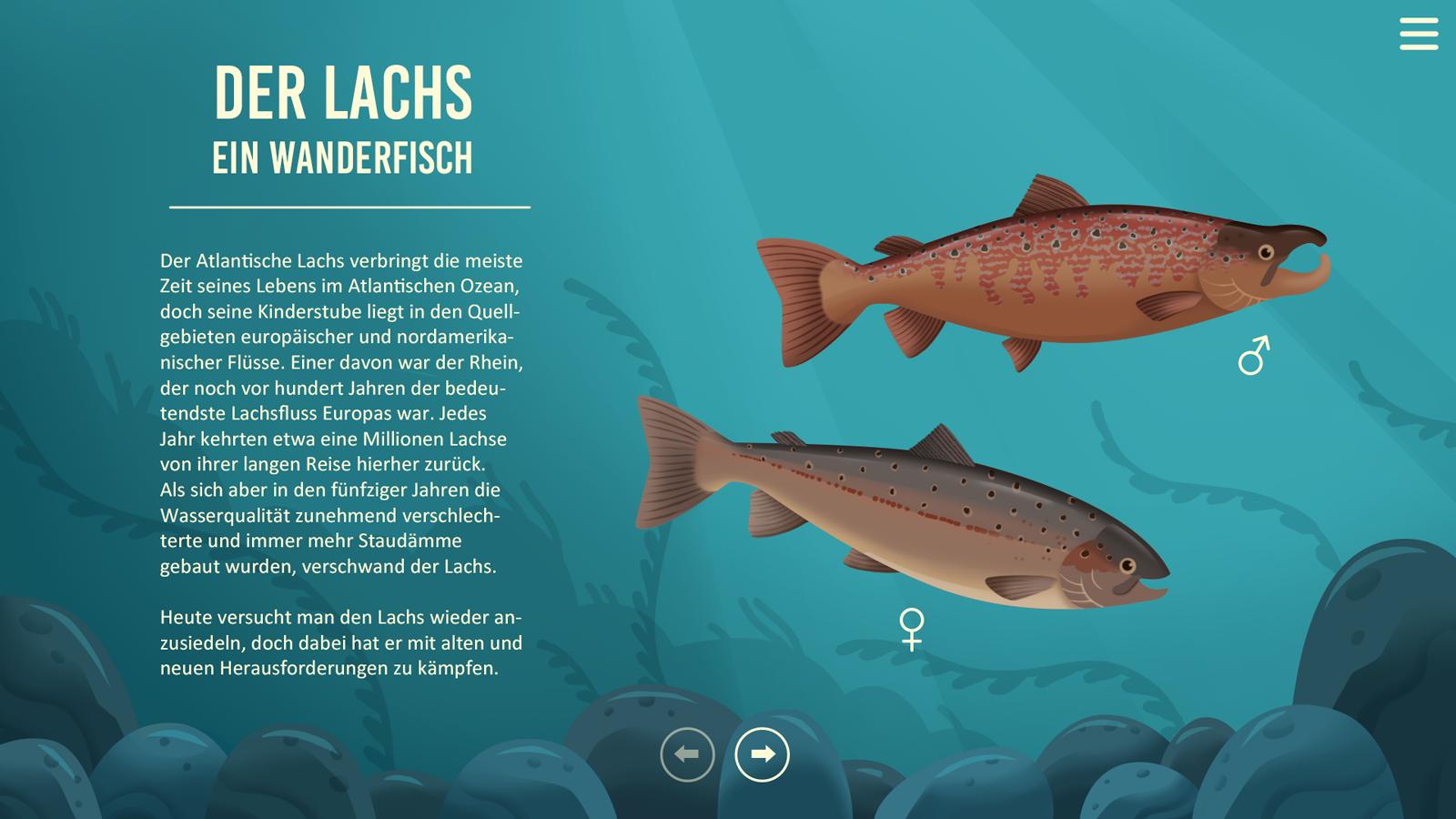 sachillustration-infografik-lachs