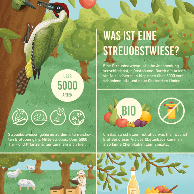 infografik-illustration-streuobstwiese